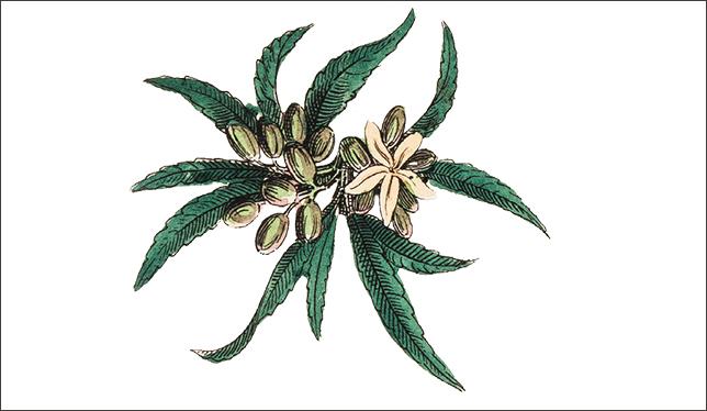 Légalisation du cannabis : les chercheurs se préparent